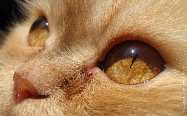 кошка, кошачий глаз, кошачьи глаза