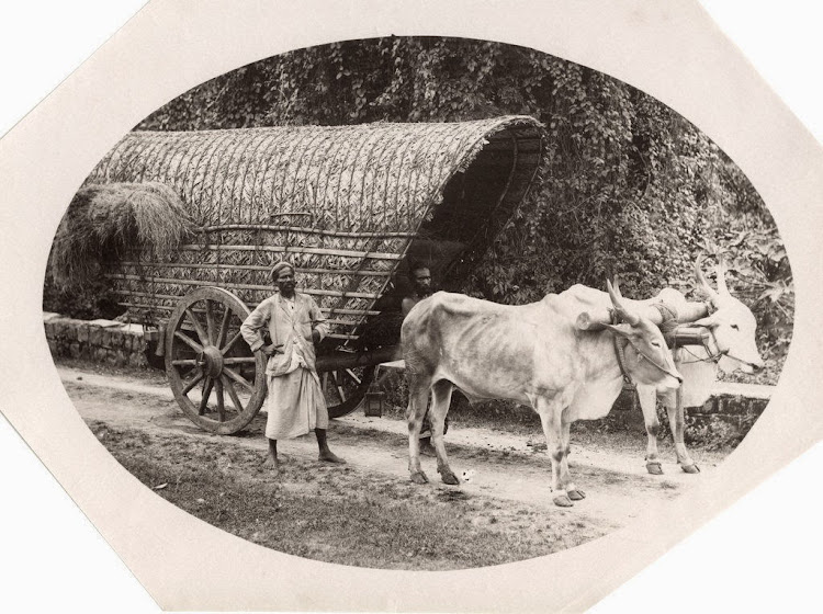 Indian Bullock Drawn Cart - c1880's