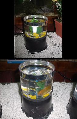 Mini aquário com luz e peixe
