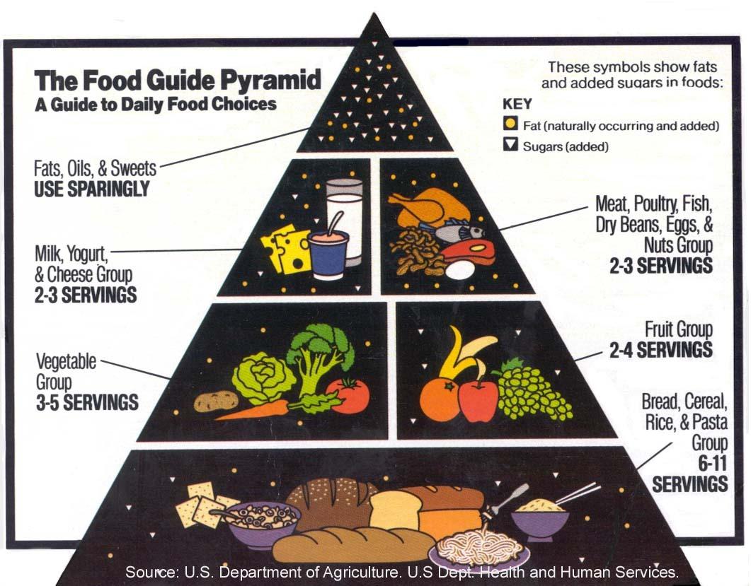 ocean food pyramid - HD1061×829