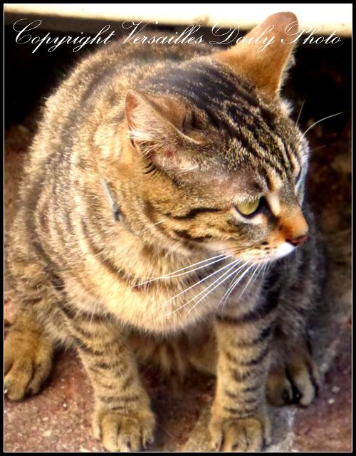 Cat Versailles