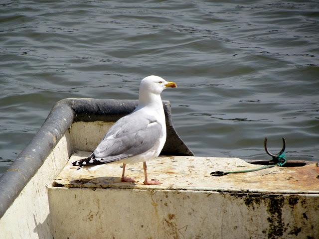 gull on a boat