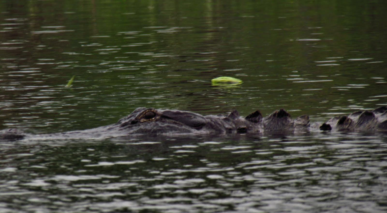 Adventures of a vagabond volunteer paddle at sheldon lake for Sheldon lake fishing