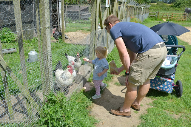 Tin Box Tot feeding chickens through a wire fence