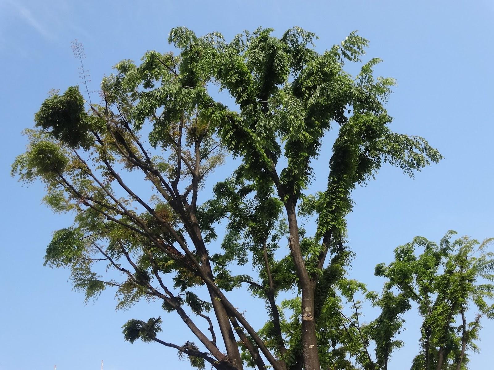 木,枝,樹木〈著作権フリー無料画像〉Free Stock Photos