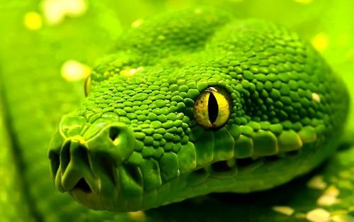 [MvP Comum] Willzinho e Allex Sonhar+com+cobra+verde