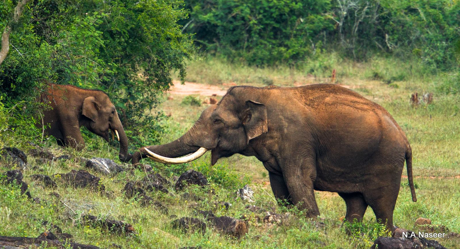 list of endangered species in wildlife sanctuary in india So, get ready for some chilling fun across the varying wildlife national parks and sanctuaries that are blooming with fauna in india you might be familiar places such as bandipur and masinagudi are some of those rarest of rare places that store in a vault of a variety of endangered species when you visit.