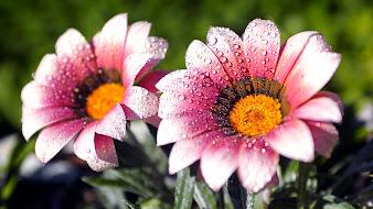 #5 Lovely Flowers Wallpaper Desktop Background Full Screen