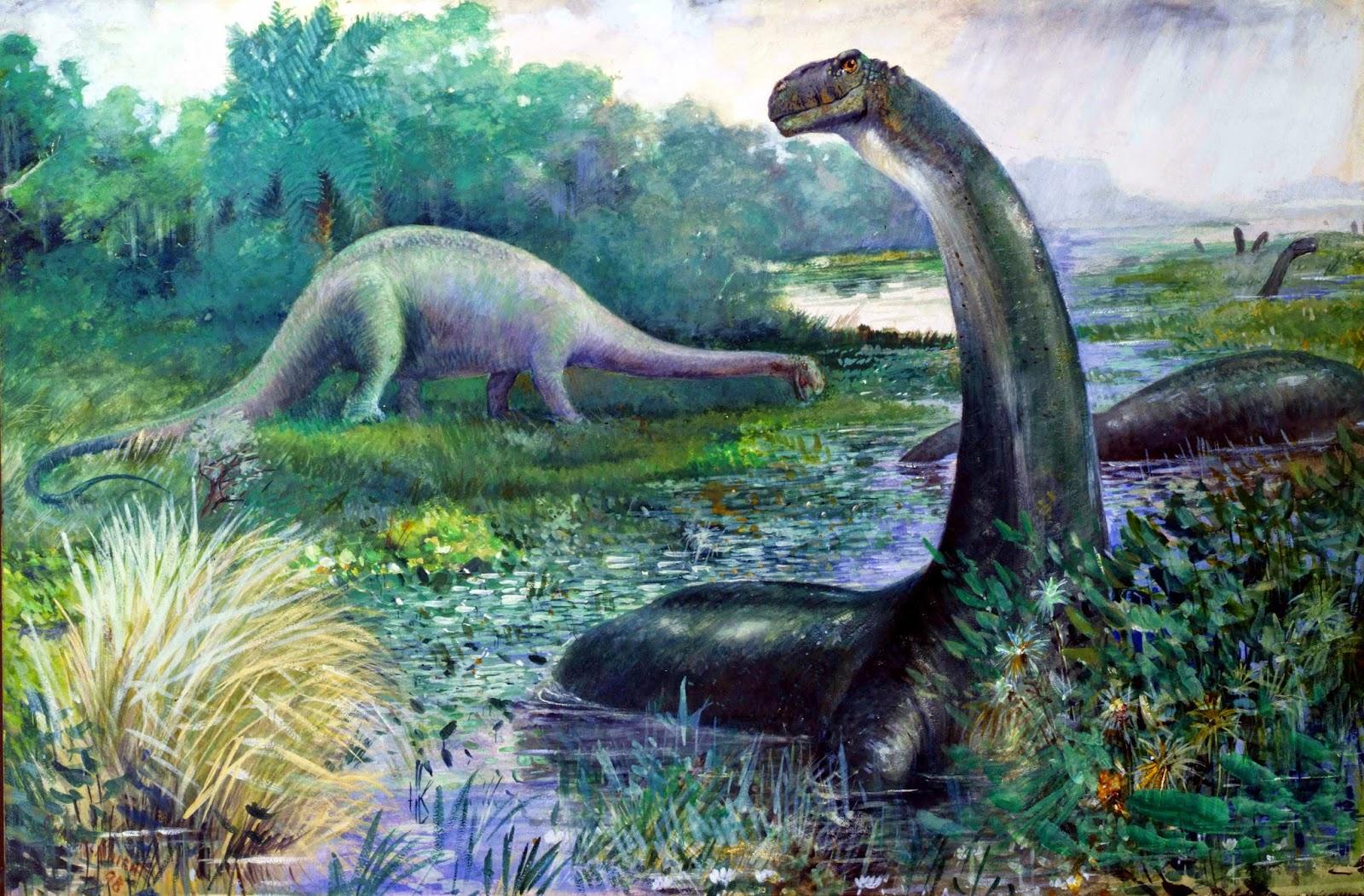 Il Brontosaurus è esistito realmente o è una specie del genere Apatosaurus