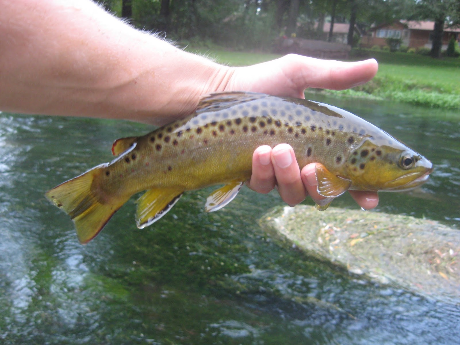 Minnesota driftless fly fishing trip report trout on the for Driftless fly fishing