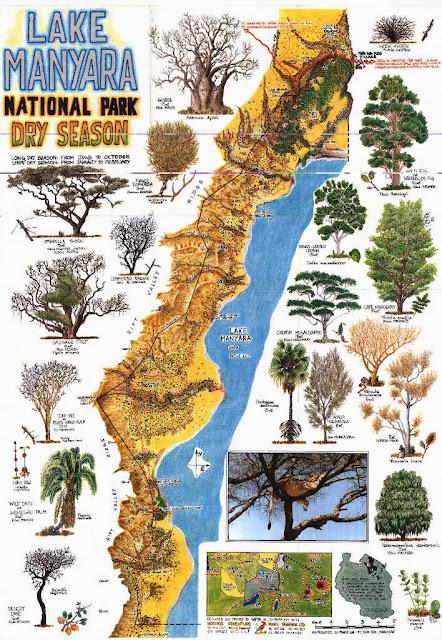 Plano Lago Manyara