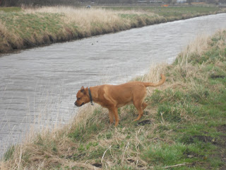 Sheba looking at the river.