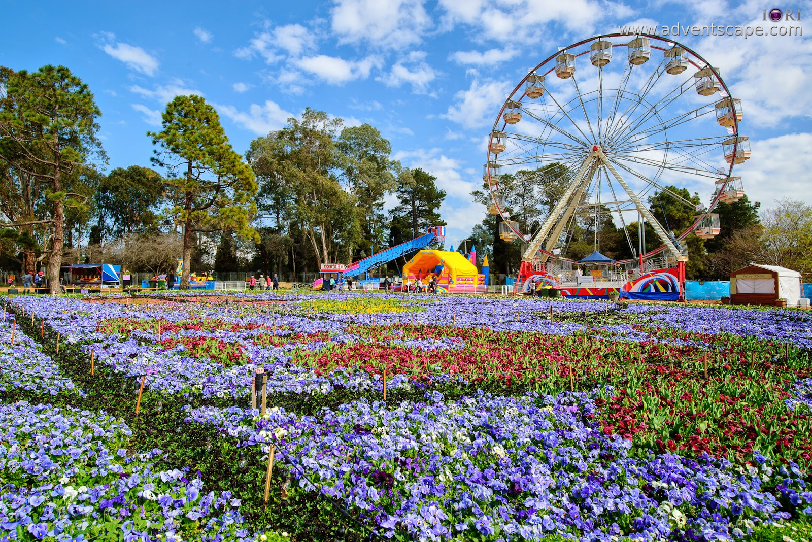 Philip Avellana, iori, advenscape, Floriade, 2014, spring festival, Canberra, ACT, Australian Capital Territory, park, flowers, blossom, iconic