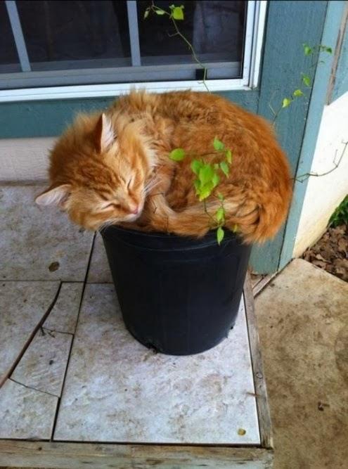 Grow a cat