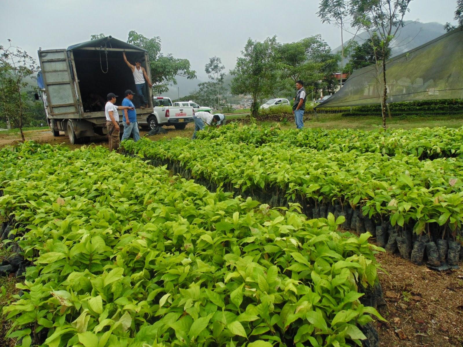 Zamora chinchipe nuevas plantas para productores for Viveros en zamora