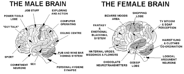 differences between male and female brain Studying the structural and function differences between male and female brains could help ferret out causes and possible treatments for certain brain disorders, the.