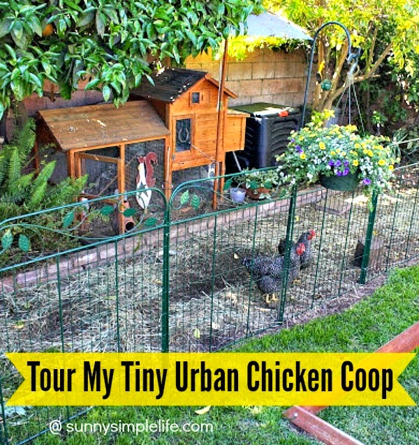 Raising Chickens In The Heart Of The City