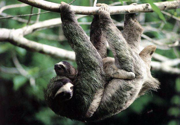 March 2013 funny and cute animals - Funny sloth pics ...
