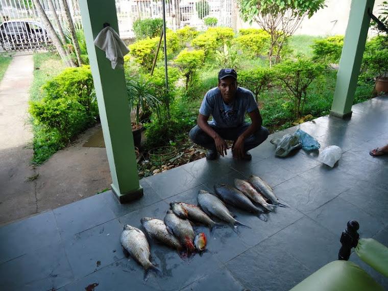 Piranha, Piau e Curimba