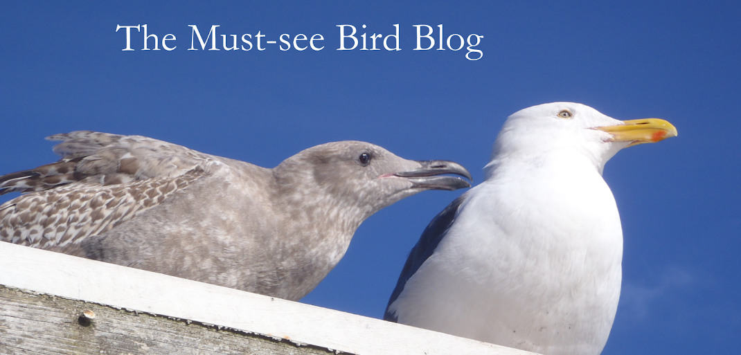The Must-see Bird Blog