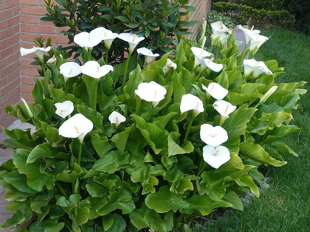 Me gustan las plantas - Plantas terraza mucho sol ...