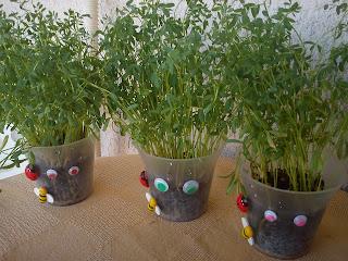 Φυτεύουμε φακές-craft for kids