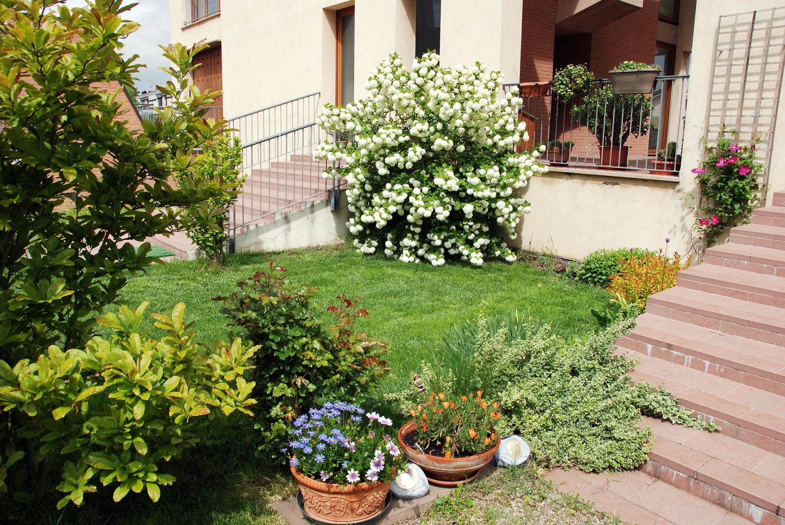 Il mondo in un giardino fine aprile in giardino - Sempreverde da giardino ...