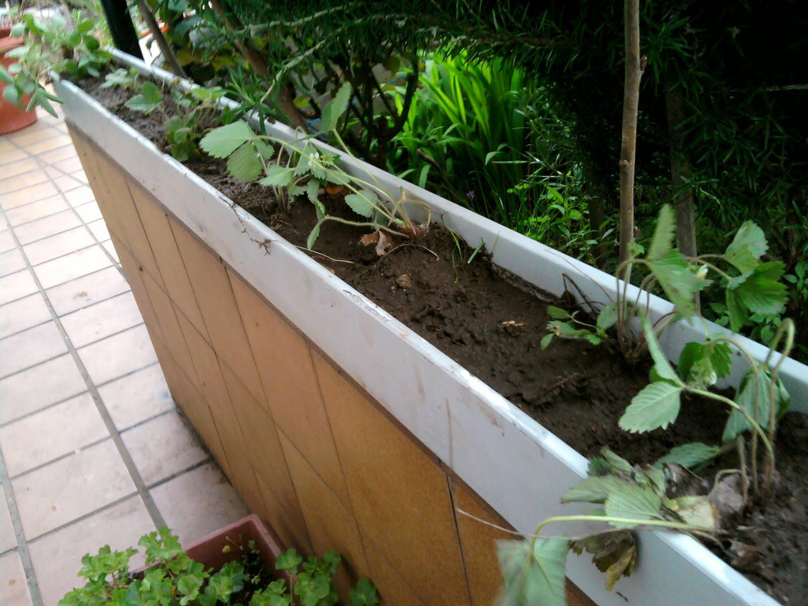 La plaza de mertesaker i d i jardineras colgantes for Planta arbustos para jardineras