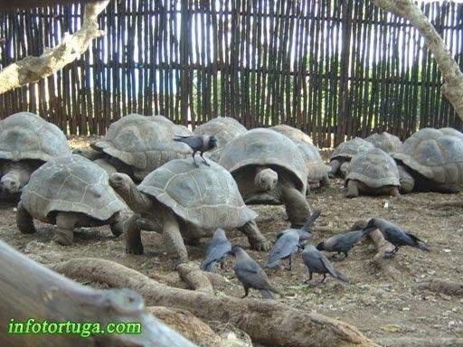 Grupo de tortugas en un centro de Tanzania