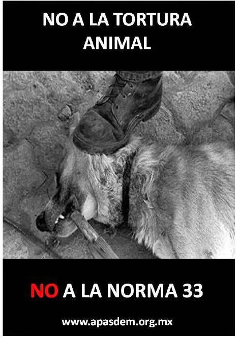 """FACE """"ADOPCIONES ARAGON"""" Y EN TWITTER POSTEAMOS LAS CAMPAÑAS DE ESTERILIZACION @ADOPCIONARAGON"""