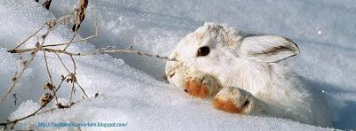 Belle image de couverture facebook neige