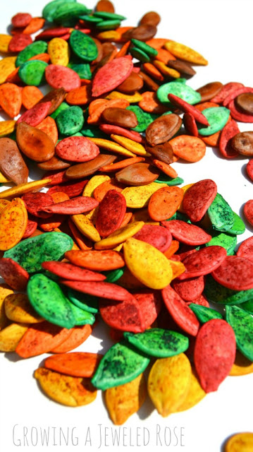 Make Fall colored and scented pumpkin seeds for arts, crafts, and sensory play!  Easy to make and so many ways to PLAY!