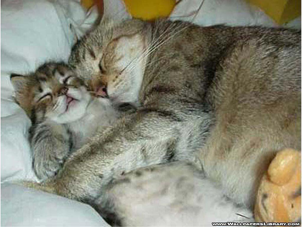 hilarious cats - photo #22