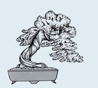 http://evoluzionebonsai.blogspot.it/2015/02/stili-bonsai-bankan-tronco.html