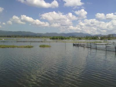 Rowo Jombor