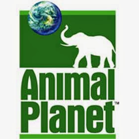 Animal Planet Live - Watch Animal Planet Entertainment Channel Online