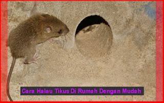 Cara Menghalau Tikus Di Rumah