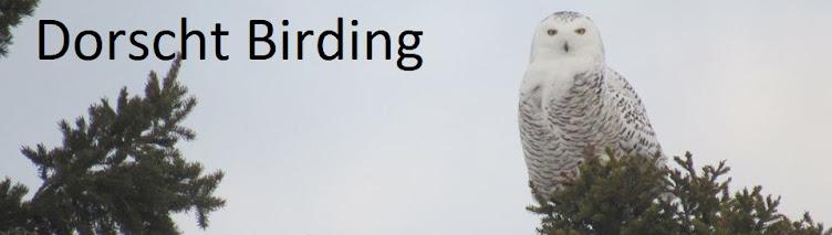 Dorscht Birding