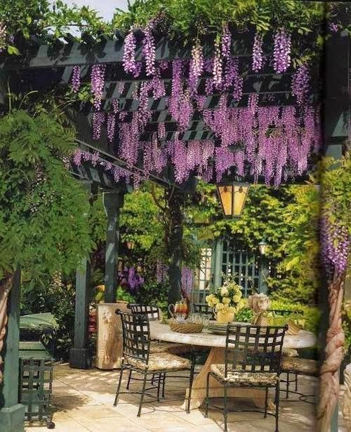 Making Our Wisteria Filled Pergola A Reality