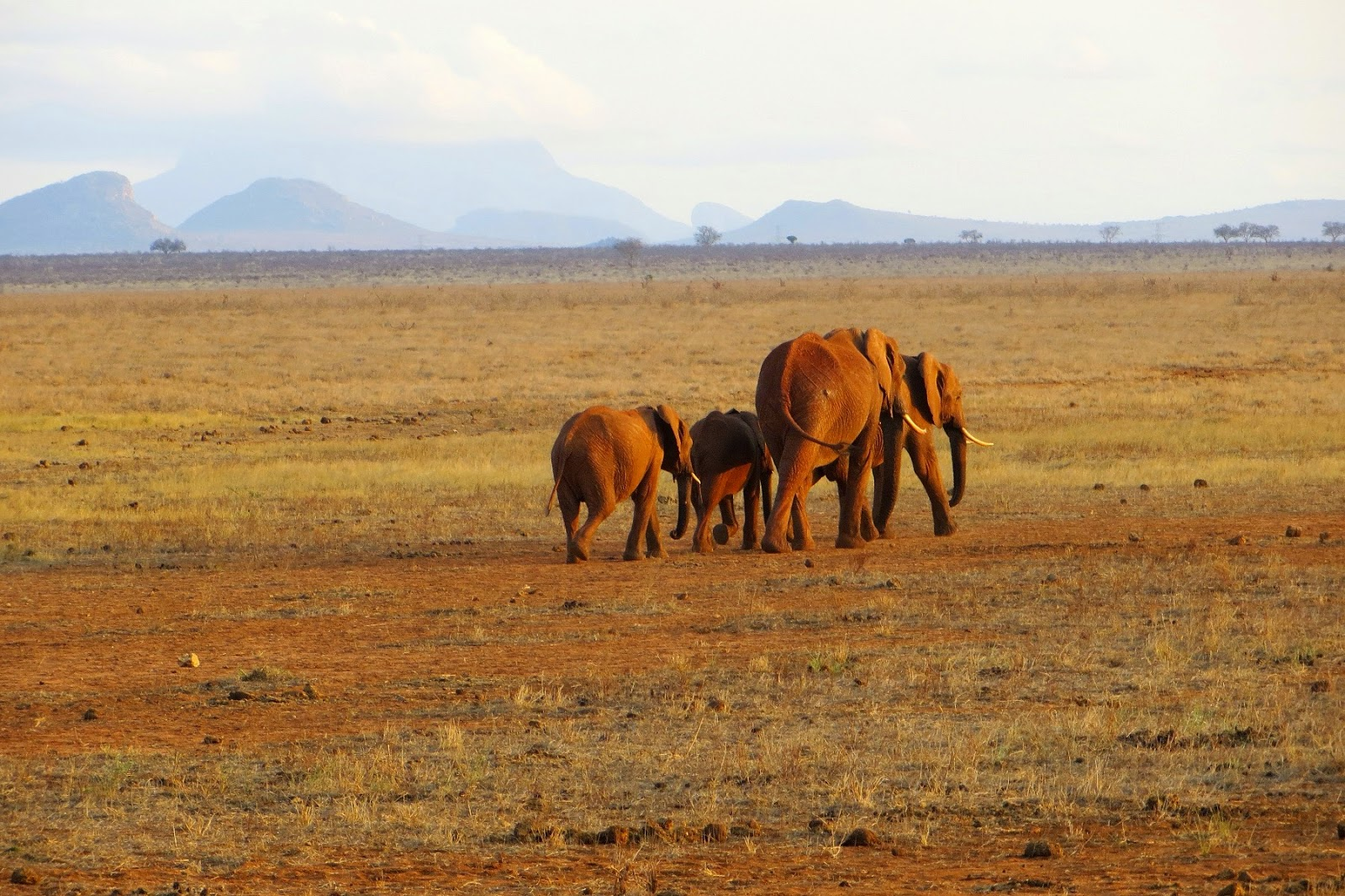 safari in kenya di quattro giorni tsavo est