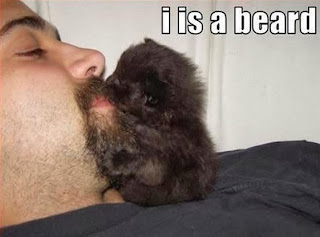 lolcat beard