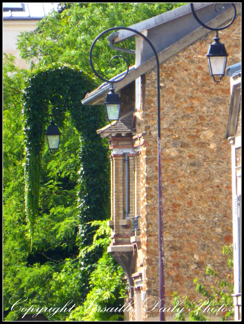Vine covered street lamp Versailles