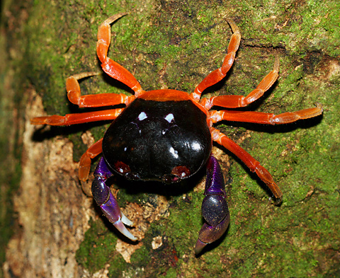 Animal A Day!: Halloween Crab