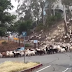 "Who let the ""goats"" out!  See how the goats go wild!"