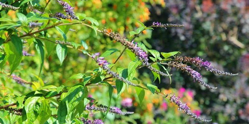 Havefolket: buske, farver & havedesign