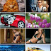 LIFEstyle News MiXture Images. Wallpapers Part (429)