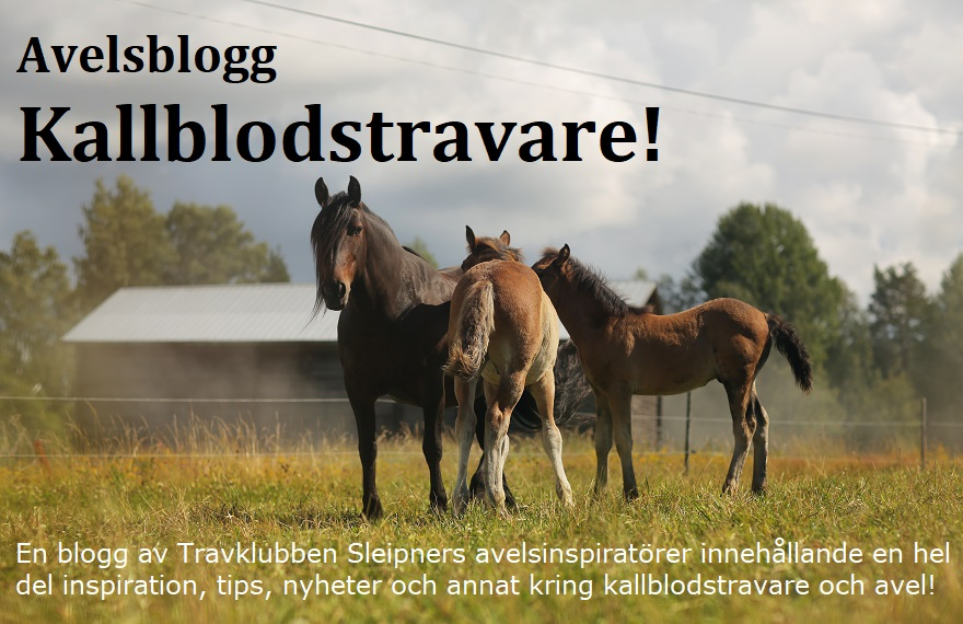 Avelsblogg Kallblodstravare