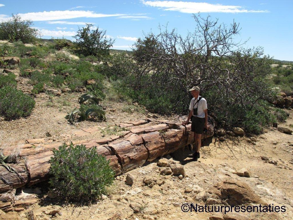 Natuur en reisblog natuurpresentaties: levende en dode fossielen ...
