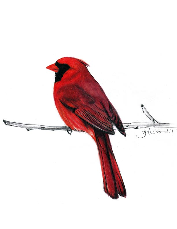 Meanings behind a red cardinal myideasbedroom com