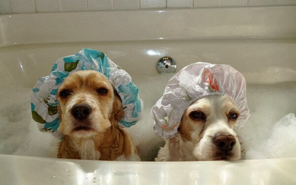 Funny animals of the week - 6 December 2013 (35 pics), dogs take a bath wears shower hats